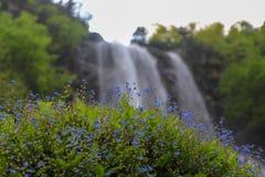 Леса, водопады и потоки, который нужно ослабить стоковое изображение