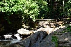 Леса, водопады, природа Стоковые Изображения RF