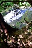 Леса, водопады, природа Стоковое фото RF