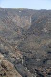 Леса всемирного наследия Мадейры ужасно разрушенные огнями в 2016 Некоторые из деревьев имеют огромную волю жизни и выдержали это стоковые изображения