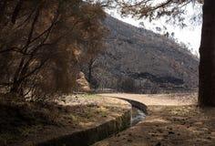 Леса всемирного наследия Мадейры ужасно разрушенные огнями в 2016 Некоторые из деревьев имеют огромную волю жизни и выдержали это стоковое фото rf