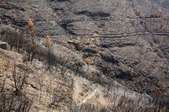 Леса всемирного наследия Мадейры ужасно разрушенные огнями в 2016 стоковое изображение