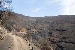 Леса всемирного наследия Мадейры ужасно разрушенные огнями в 2016 стоковое фото rf