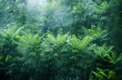 Леса в проливном дожде Стоковая Фотография