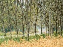 Леса и злаковик около дороги Стоковое Изображение RF