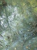 Леса мангровы и естественные леса мангровы Таиланда Красная мангрова стоковые изображения rf