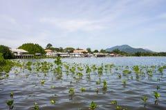 Леса мангровы Стоковая Фотография