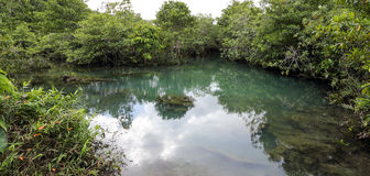 Леса мангровы Стоковые Фото