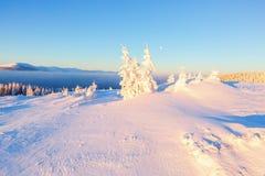 Леса покрытые с снегом Стоковое Изображение RF