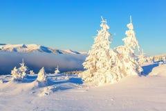Леса покрытые с снегом Стоковое Изображение