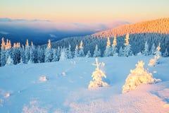 Леса покрытые с снегом Стоковое Фото