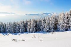 Леса покрытые с снегом Стоковая Фотография