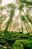 Леса Трансильвании стоковое изображение