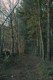 Лесистая тропа осени Стоковое Изображение