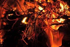 Лесного пожара конец вверх Стоковая Фотография RF