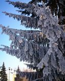 Лесное дерево зимы в снеге стоковое изображение