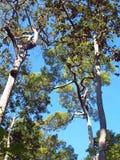 Лесное дерево в национальном парке Азии, Таиланде 1 Стоковое Изображение RF