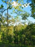 Лесное дерево в национальном парке Азии, Таиланде 7 Стоковые Изображения RF