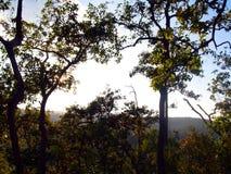 Лесное дерево в национальном парке Азии, Таиланде 9 Стоковая Фотография RF
