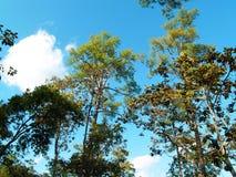 Лесное дерево в национальном парке Азии, Таиланде 6 Стоковые Изображения RF