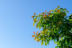 Лесное дерево и голубое небо Стоковое Изображение