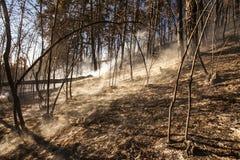 Лесной пожар, бедствие природы стоковое фото rf