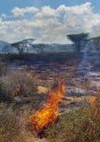 Лесной пожар в африканской саванне стоковые изображения