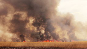 Лесной пожар в полях видеоматериал