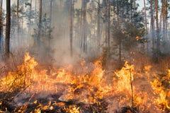 Лесной пожар в прогрессе стоковая фотография rf