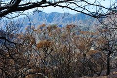 Лесной пожар в сентябре 2017 стоковое изображение rf
