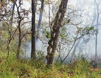 Лесной пожар в Chitwan, Непале Стоковые Изображения RF