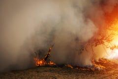 Лесной пожар, горящий сосновый лес на заходе солнца стоковое фото