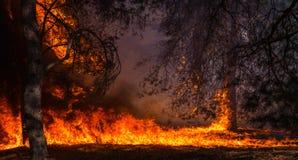 Лесной пожар, горящий сосновый лес стоковое фото rf