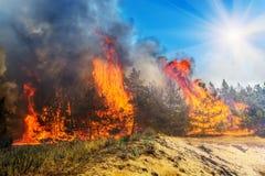Лесной пожар, дерево лесного пожара горящее в красном и оранжевом цвете стоковая фотография rf