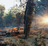 Лесной пожар, дерево лесного пожара горящее в красном и оранжевом цвете стоковое изображение