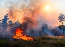 Лесной пожар Используя противопожарную полосу для stoping лесной пожар Стоковое Изображение RF