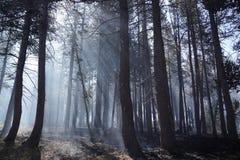 Лесной пожар леса стоковая фотография