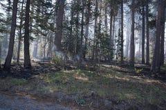 Лесной пожар леса стоковая фотография rf