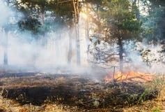 Лесной пожар на заходе солнца Стоковые Фотографии RF