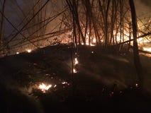 Лесной пожар на ноче стоковое фото