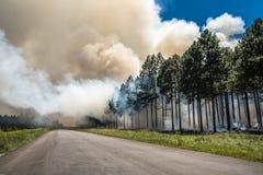Лесной пожар, огонь в лесе стоковые фото