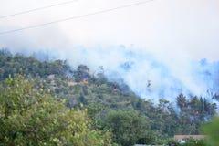 Лесной пожар Сгорели деревья после лесного пожара, загрязнения и много дыма стоковые изображения