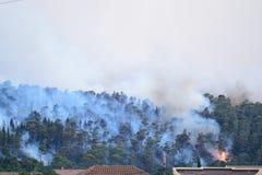 Лесной пожар Сгорели деревья после лесного пожара, загрязнения и много дыма стоковая фотография