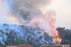 Лесной пожар Сгорели деревья после лесного пожара, загрязнения и много дыма стоковое изображение rf