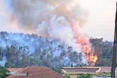 Лесной пожар Сгорели деревья после лесного пожара, загрязнения и много дыма стоковая фотография rf