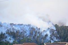 Лесной пожар Сгорели деревья после лесного пожара, загрязнения и много дыма стоковое фото