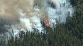 Лесной пожар с густым дымом сток-видео