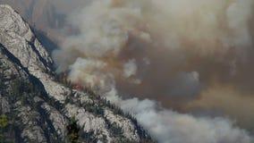 Лесной пожар с густым дымом акции видеоматериалы