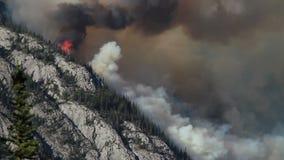 Лесной пожар с густым дымом видеоматериал