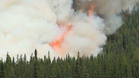 Лесной пожар с очень большими пламенами сток-видео